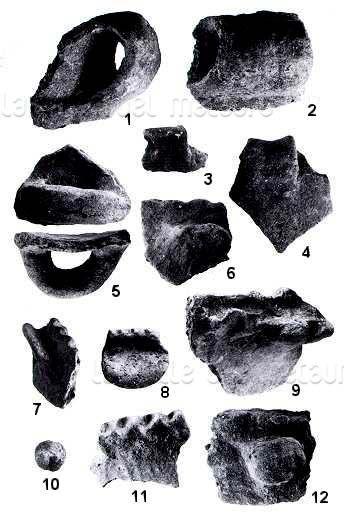Insediamento preistorico alla foce dell